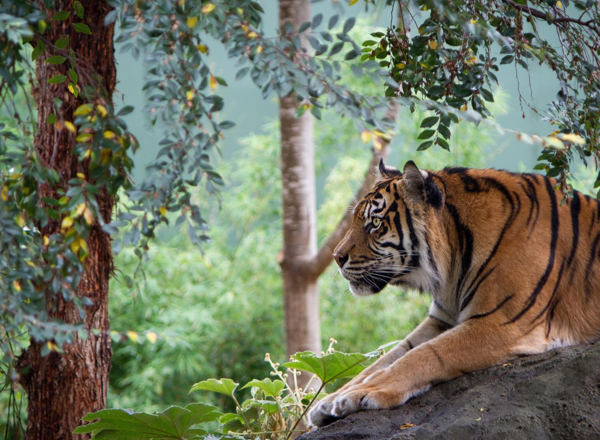 В Хабаровском крае пропал человек. Подозревают тигра.